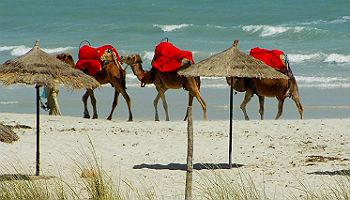 Kamelkarawane am Strand von Djerba © lucky-pixel/ pixelio.de
