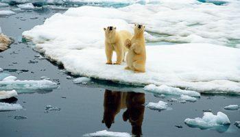 """Auf der Photo+Adventure zeigt Norbert Rosing die Bilder in seinem Vortrag """"Im Reich der Eisbären"""" © Norbert Rosing/Photo+Adventure 2018"""